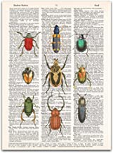 Beetles, Insects, Arthropods, Dictionary Page Wall Art, 8x11 inches, Unframed