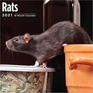 2021 Rats Wall Calendar by Bright Day, 12 x 12 Inch, Rodent Pet