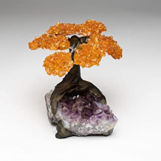 Astro Gallery of Gems Medium Citrine Clustered Gemstone Tree on Amethyst Matrix (The Money Tree)