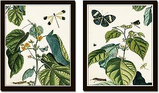 Botanical Print Set Nature Study Collage No. 23 Set of 2 Fine Art Giclee Prints - Unframed