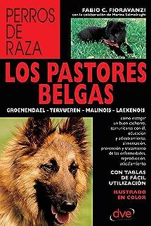 pastor belga puppy