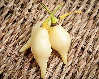 White Biquinho Chupetinho Heirloom Pepper Premium Seed Packet
