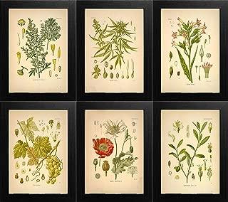 Best hagemann botanical prints Reviews