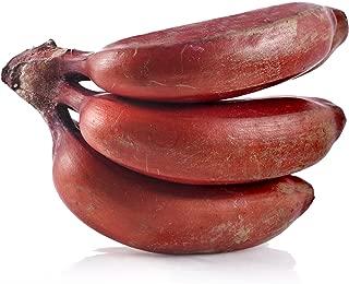 Musa Dwarf Red Banana Tree Live Plant