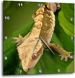 3dRose DPP_84105_1 New Caledonian Crested Gecko Lizard - NA02 MPR0086 - Maresa Pryor - Wall Clock, 10 by 10-Inch