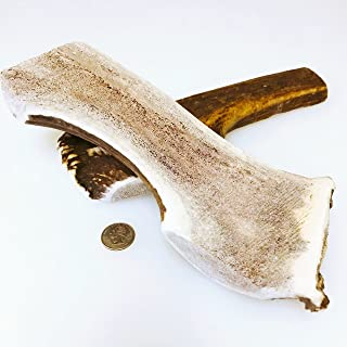 Mountain Dog Chews- Mammoth XXL-Split Elk Antler Dog Chew [10-11Inches Long & 14-16 OZ] Fresh Grade A for Large Dogs!