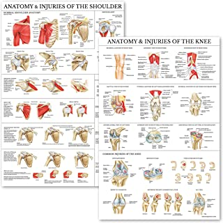 Sponsored Ad - 2 Pack - Anatomy and Injuries of The Knee & Shoulder Poster Set - Anatomical Chart Set - Laminated 18