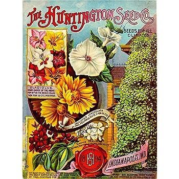 Cole/'s Garden Annual 1894 Farm Flower Seeds Pella Lowa metal tin sign home decor