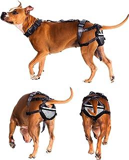 PABS - Cinturón de persecución para Perros - Sistema de protección contra la cría de Mascotas, Control de Nacimiento Humano Protege la Raza de repente, XL con 4 Almohadillas para Orejas