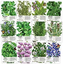 Best burdock seeds for sale Reviews