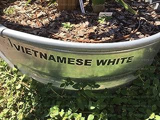 Best vietnamese white dragon fruit Reviews