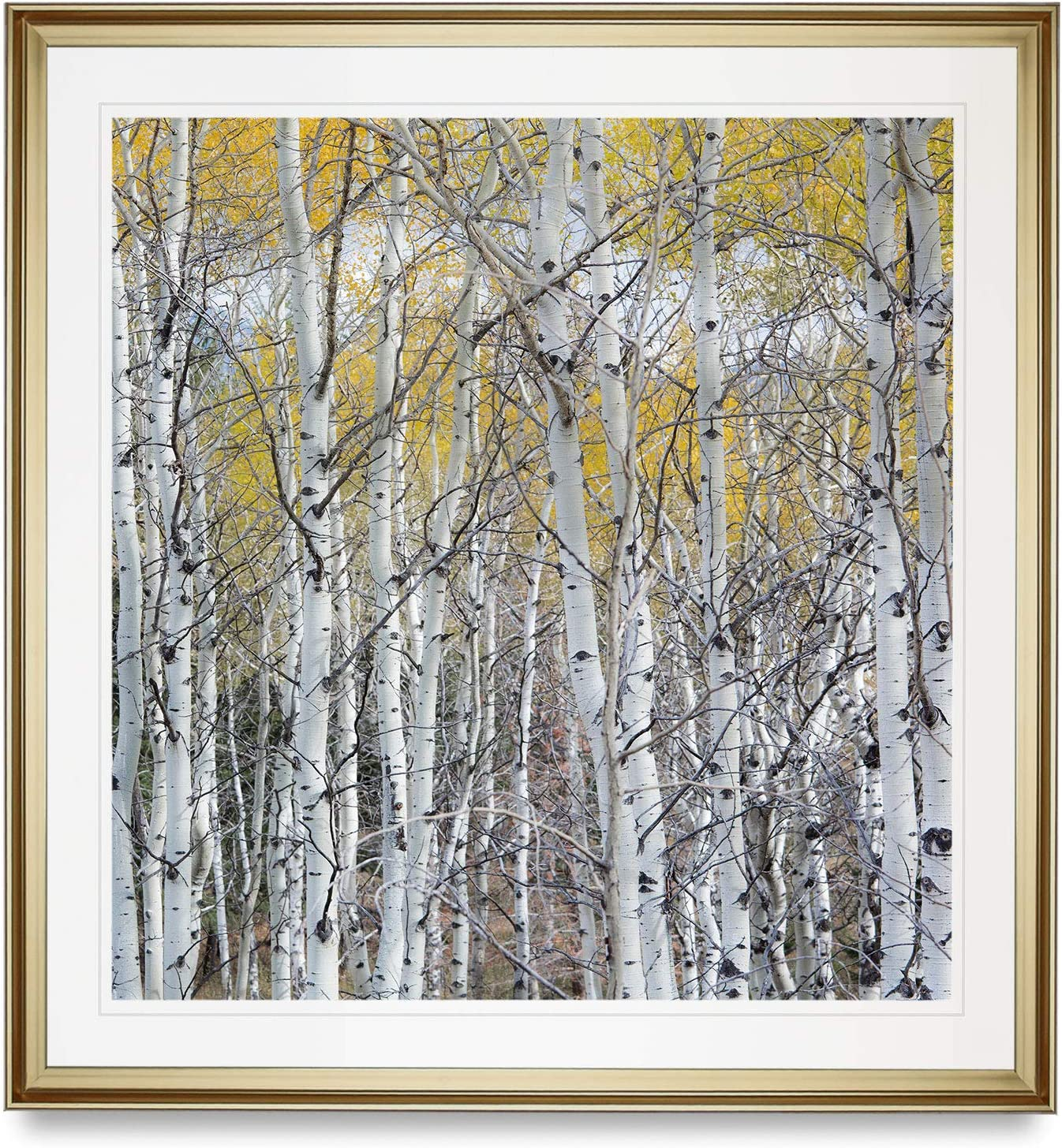 WEXFORD HOME Colorado Rocky Mountain Aspen Tree Pictures Golden Forest Framed Art Prints Landscape Painting Home Wall Decor, 16X16