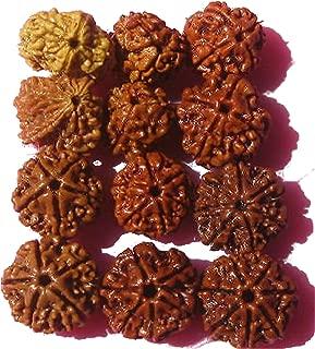 four mukhi rudraksha
