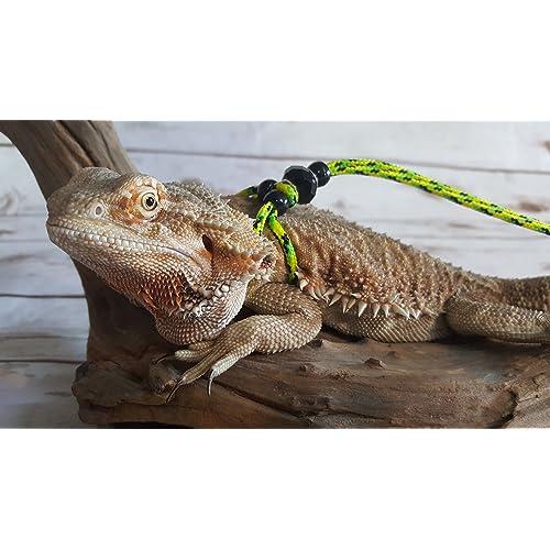 Bearded Dragon Collar: Amazon com