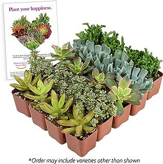 Altman Plants Mini Live Assorted Succulents Weddings, Party favors, DIY terrariums, Gifts 2