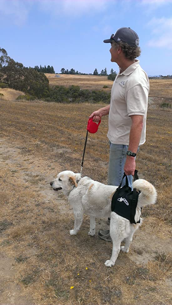 Dog lift/ support harness:Airlift One Extra Large Walkabout Support Sling