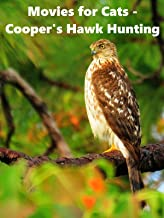 Movies for Cats - Cooper's Hawk Hunting