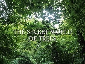 The Secret World of Trees