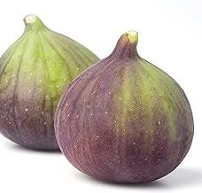 olympian fig