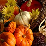 Select from a wide variety of themed wallpapers Enjoy images from the Thanksgiving holiday Change from one wallpaper to another easily