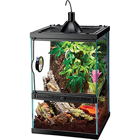 Amazon Com Zilla Reptile Starter Kit 10 With Light And Heat Tropical Pet Supplies
