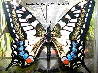 Active Aliforms Moving Butterfly - Swallowtail