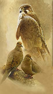 Hawk Doves Art Print Coopers Hawk Giclee Canvas original painting by Lawrence Dyer Wildlife Bird Art Cottage Print 16