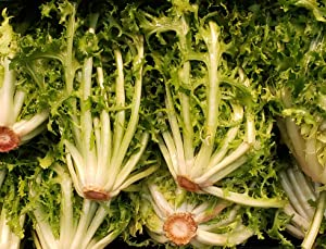 """Endive Seeds """"Salad King"""" - Bolt, Heat, and Frost Resistant Leaf Chicory aka Puntarelle 