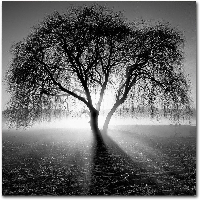Trademark Fine Art Lightning Tree I by Moises Levy, 14x14Inch