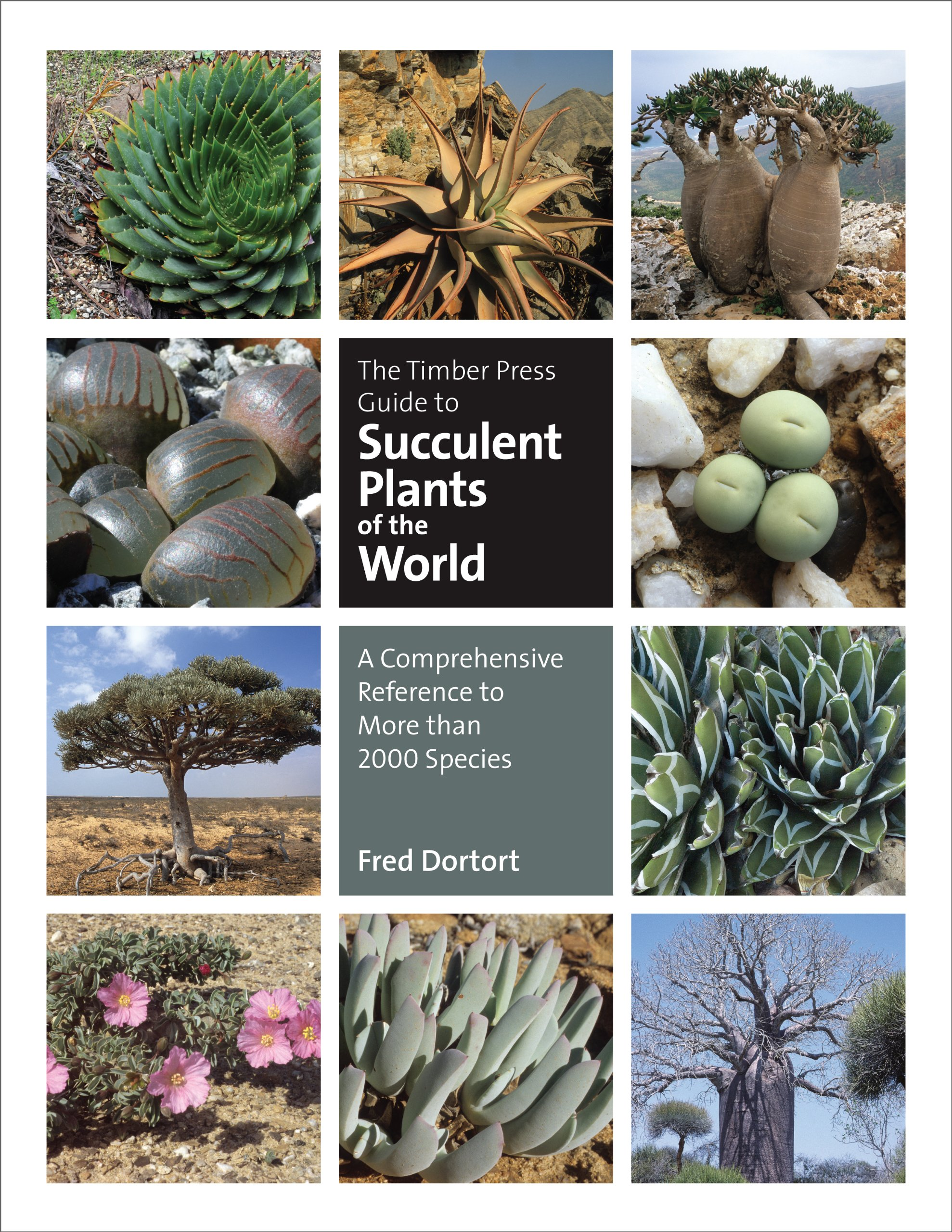 Image OfThe Timber Press Guide To Succulent Plants Of The World: A Comprehensive Reference To More Than 2000 Species (English Edit...