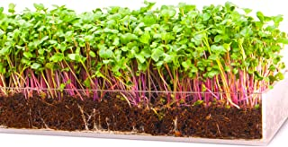 Grow 'n Serve Microgreen Kit – Attractive Table Centerpiece Planter Tray + Fiber Soil + Spray Bottle + Seed. Sprout Healthy Zesty Superfood Greens. Great Indoor Garden Gift for Men, Women, Foodie