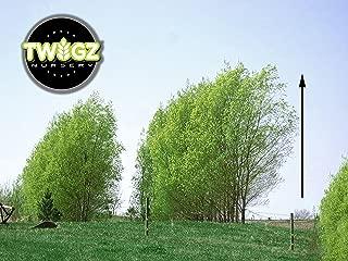 Best australian hybrid willow Reviews