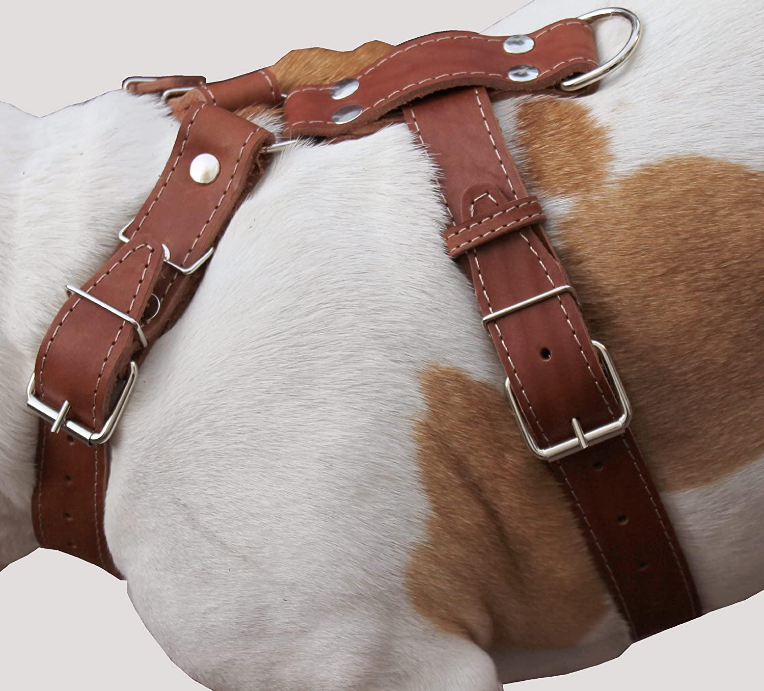 Brown Genuine Leather Dog Harness, Large to XLarge. 35 39  Chest, 1.5  Wide Straps, Great Dane Cane Corso