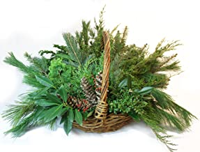 Holiday Greens Fresh Evergreen Decorative Bough Mix for DIY Decorating 10 Pound Box