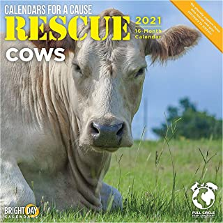 Bright Day Calendars 2021 Rescue Cows Wall Calendar by Bright Day, 12 x 12 Inch, Farm Animals Calendars for a Cause