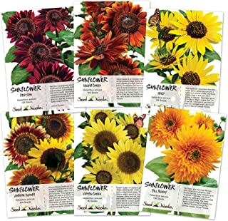 Crazy Sunflower Seed Packet Assortment (6 Individual Seed Packets) Non-GMO Seeds by Seed Needs