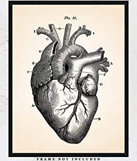 Vintage Anatomical Heart Wall Art Print: Unique Room Decor for Boys, Girls, Men & Women - (11x14) Unframed Picture - Great Gift Idea