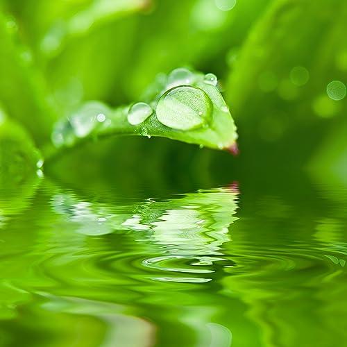 Meditation Rain Sounds: 30 Loopable Rain Sounds for ...