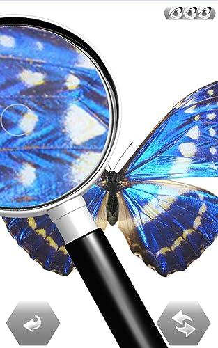 『世界の昆虫採集』の7枚目の画像