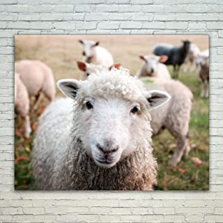 Westlake Art Animal Sheep - 16x20 Poster Print Wall Art - Modern Picture Photography Home Decor Office Birthday Gift - Unframed 16x20 Inch (C781-C8761)