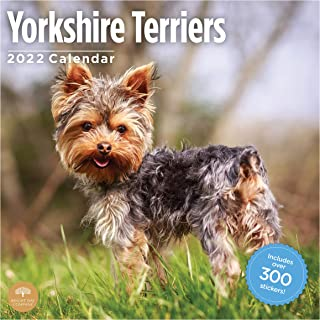 2022 Yorkshire Terriers Sticker Wall Calendar by Bright Day, 12 x 12 Inch,
