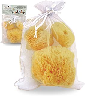 Constantia Pets Sea Sponges for Dogs - Luxury Canine Bath Care, for Pet Grooming, Soft & Gentle Pampering