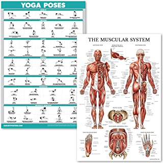 QuickFit Yoga Poses and Muscular System Anatomical Poster Set - Laminated 2 Chart Set - Yoga Position Exercise Routine & Muscle Anatomy Diagram (18