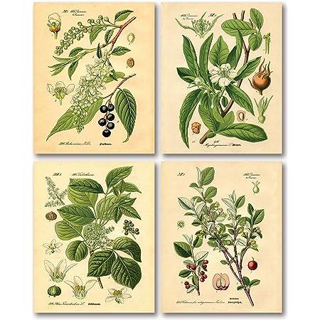Botanical Print  Botanical Poster  Kitchen Art  Gardener Gift  Tiger Plant  Vintage Art  Wall Art  Art Print  Poster  Home Decor