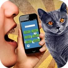 Cat Translator 3D sound