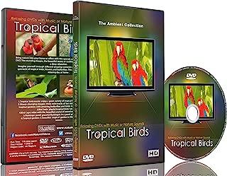 tropical music video