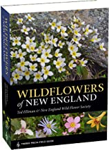 wildflowers in new hampshire