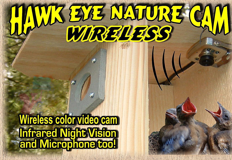 Limited Special Price Birdhouse Spy Cam BCAMHEW Hawk-Eye Set Wireless Ranking TOP4 1 Camera of