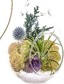Best purple sister plant Reviews