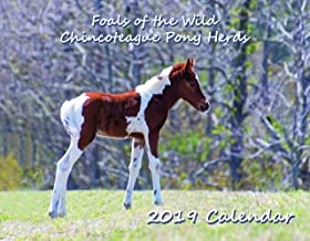 Foals of the Wild Chincoteague Pony Herds - 2019 Calendar